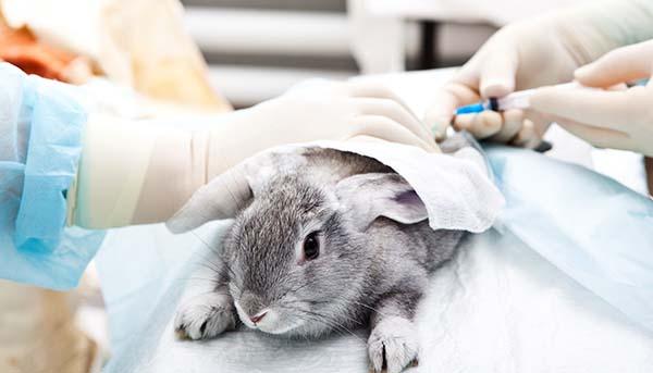 drug testing animals